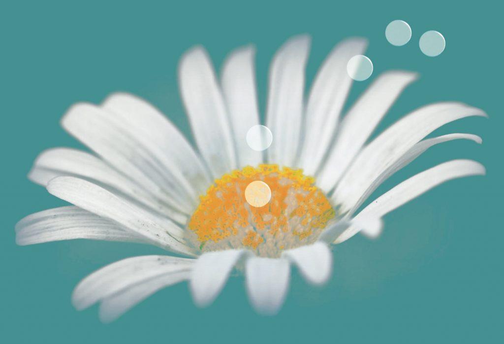 cartolina-polline